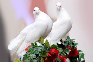 Weisse Tauben Hochzeit